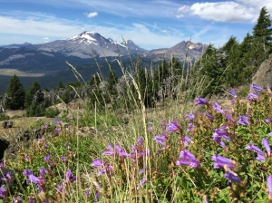 mtbachelor_flowers